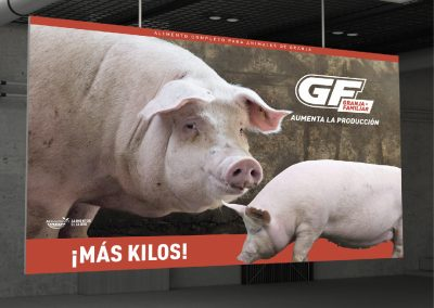 AEG - GF CERDOS
